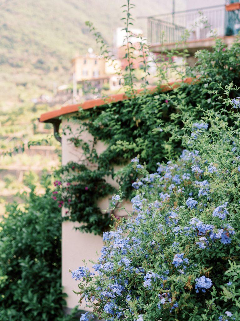 Light blue flowers in Corniglia Cinque Terre taken by landscape photographer Matt Genders